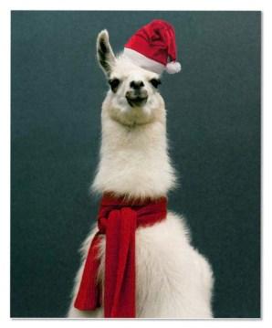 2d6bc-llama_christmas_by_emperorllama-d5nremi